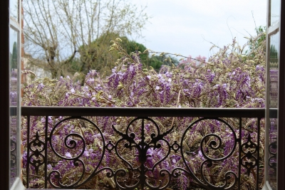 La Maison du Pont St Jacques | Purple Flowers